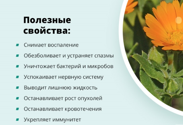 Дягилевый мед. Полезные свойства, рецепты применения, противопоказания