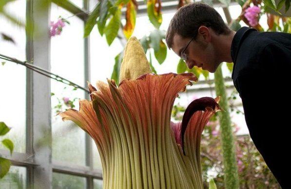 Самые красивые цветы в мире. Фото, названия, описание
