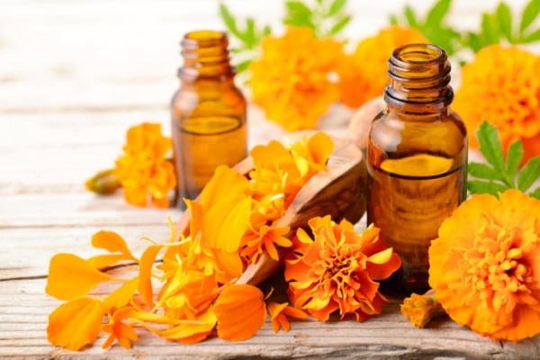 Бархатцы цветы. Лечебные свойства, рецепты, заготовка, как принимать, противопоказания