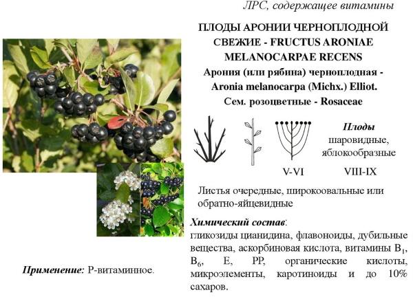 Черноплодка. Полезные свойства, рецепты варенья, настойки на водке, ликера. Как принимать, противопоказания