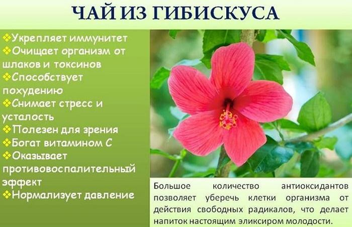 Гибискус чай. Фото, полезные свойства, рецепты применения, противопоказания