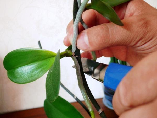 Как ухаживать за орхидеей в домашних условиях после покупки, цветения, зимой, чтобы цвела