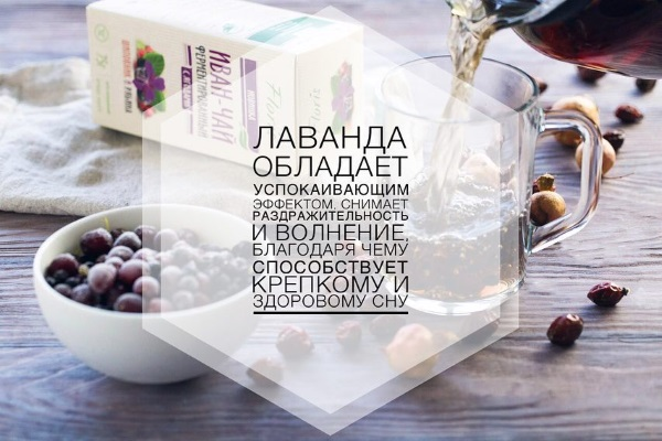 Лаванда. Полезные свойства, рецепты применения в народной медицине, косметологии. Противопоказания