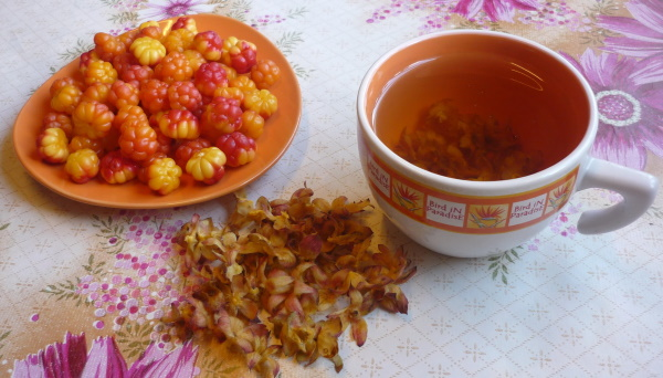 Морошка ягода. Полезные свойства, рецепты как приготовить, употреблять, противопоказания