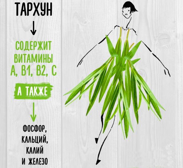 Тархун трава. Фото, полезные свойства, заготовка, рецепты применения, противопоказания