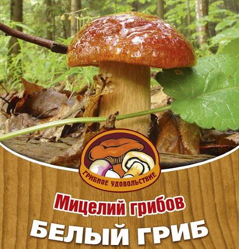 Выращивание белых грибов в домашних условиях для новичков. Технологии подробно, фото, видео