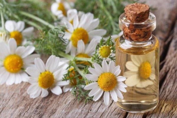 Ромашка лекарственная. Фото растения, полезные свойства, рецепты в косметологии, народной медицине