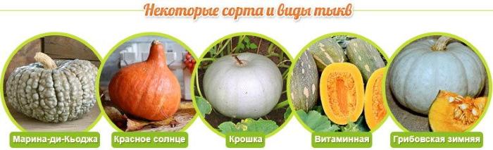 Сырая тыква. Польза и вред для организма при диабете, беременной женщины. Рецепты