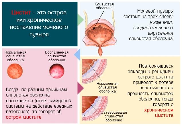 Крыжовник. Польза и вред для здоровья, хранение, рецепты как готовить и употреблять
