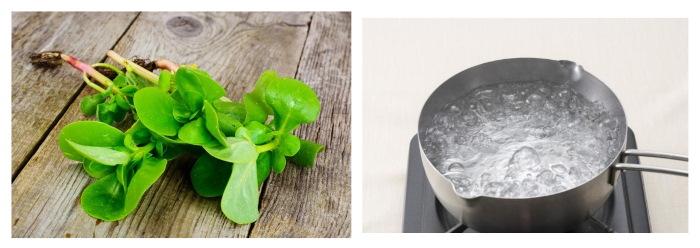 Портулак огородный. Полезные свойства, рецепты применения, противопоказания
