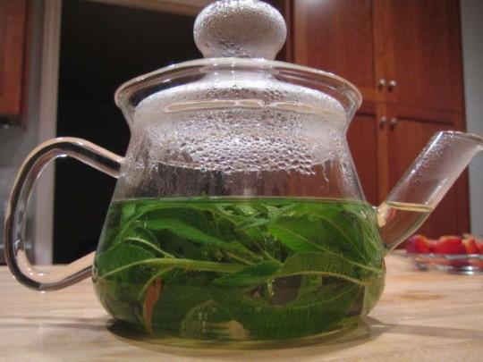 Вербена. Фото на клумбе, лекарственная дикорастущая, многолетняя, лимонная, свойства, посадка и уход, рецепты