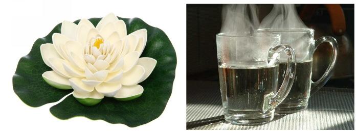 Кувшинка белая. Фото, описание, свойства и рецепты применения