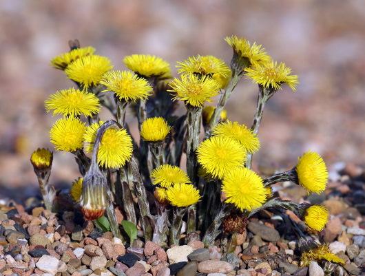 Лечебные (лекарственные) травы. Список по алфавиту, свойства, применение