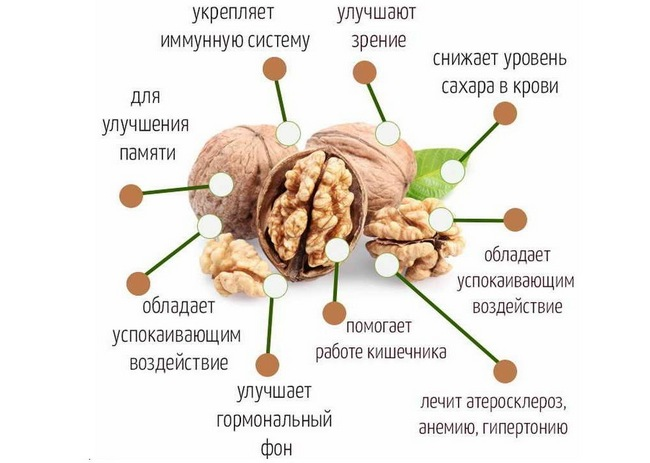 Мед с грецкими орехами. Польза и вред, как принимать для повышения иммунитета, потенции, набора веса