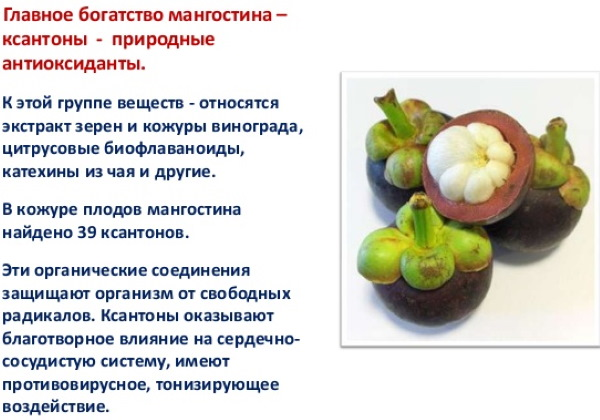 Мангустин (мангостин) фрукт. Фото, как есть для похудения, отзывы, цена, вкус