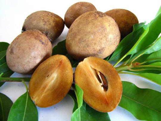 Саподилла (Ламут) фрукт. Фото, как есть, вкус, выращивание в домашних условиях