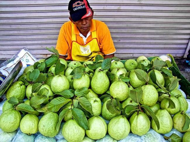 Гуава фрукт. Фото, полезные свойства, как есть, готовить, выращивание растения в домашних условиях