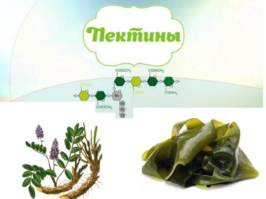 Травы для печени и поджелудочной железы. Перечень для лечения, очистки, сборы