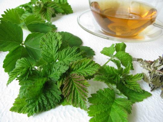 Чай из листьев малины. Польза и вред, свойства, противопоказания, как приготовить
