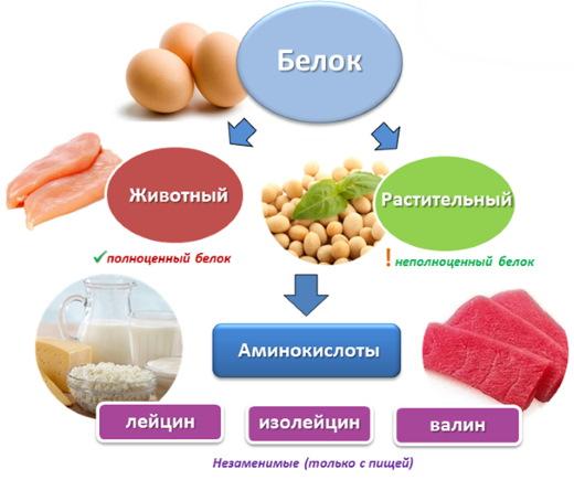 Собачий жир. Лечебные свойства и противопоказания, применение, от чего помогает
