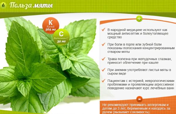 чай из мяты лечебные свойства