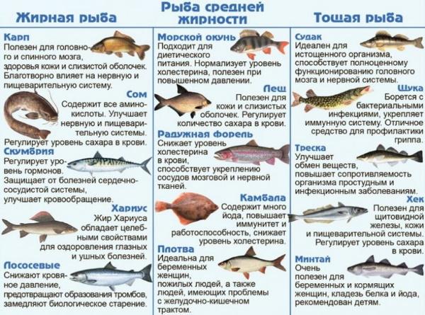Нежирные сорта рыбы. Список морской, речной для диеты при панкреатите, подагре, гастрите