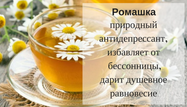 Ромашковый настой, чай, отвар. Лечебные свойства, польза внутрь, для лица, волос, в гинекологии, глаз, кишечника, вред