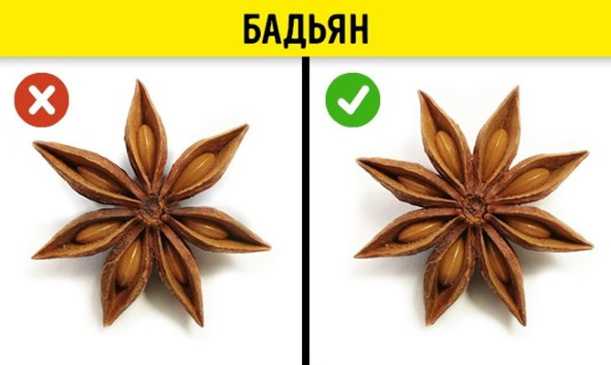 Бадьян звездчатый анис. Фото, где растет, полезные свойства, рецепты применения