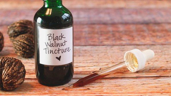 Настойка из черного ореха. Применение, рецепт приготовления, полезные свойства