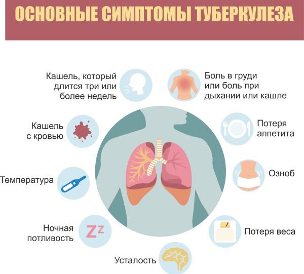 Жир енота. Лечебные свойства, применение, противопоказания