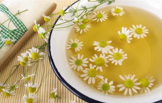 Цветки ромашки. Лечебные свойства и противопоказания