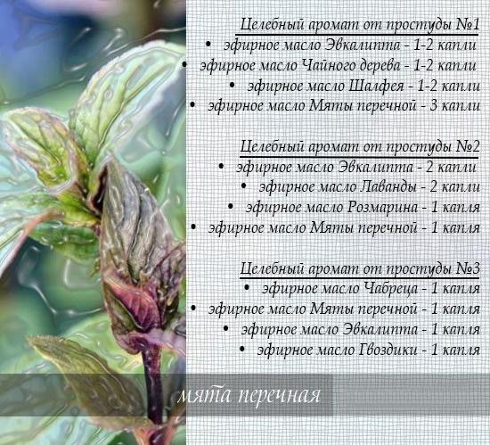Мята перечная. Фото растение, листья, польза, применение