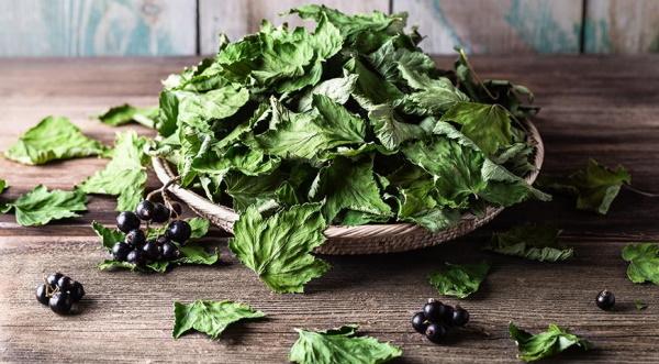 Чай из листьев смородины и малины, мяты ферментированный. Рецепты, польза и вред