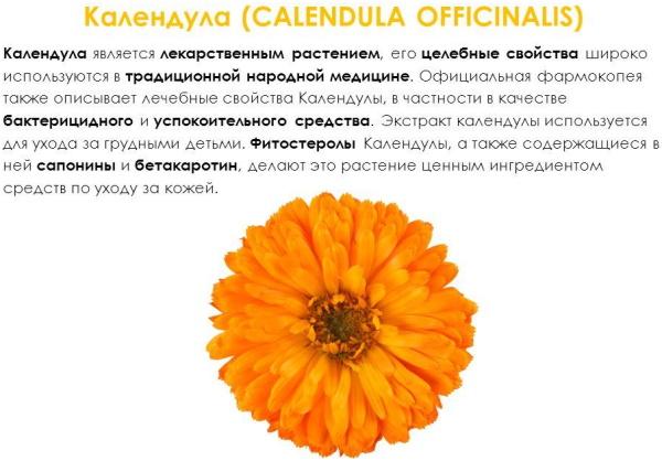 Цветки календулы. Лечебные свойства и противопоказания