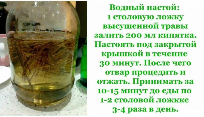 Зубровка трава. Фото, где растет в России, полезные свойства